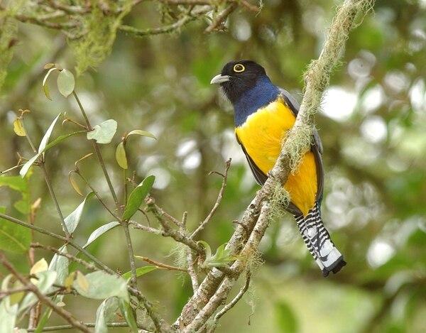 La jornada de avistamiento de aves es una oportunidad para conocer más sobre la biodiversidad presente en un lugar. | RAFAEL PACHECO /ARCHIVO