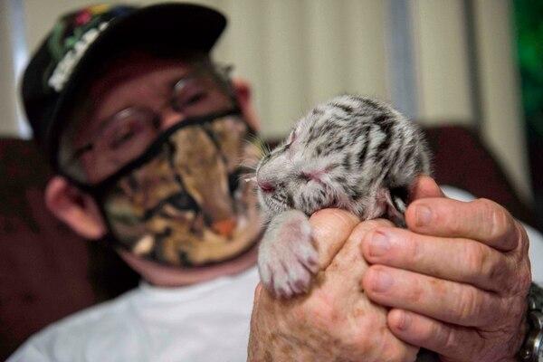 El tigre figura como una especie en peligro de extinción.
