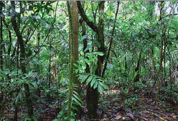Costa Rica es un ejemplo mundial en políticas de protección forestal, dijo FAO