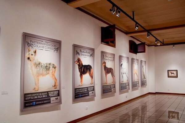 Zaguates recibieron la dignidad de los perros de raza en esta campaña. Foto: Facebook Territorio de Zaguates/LN