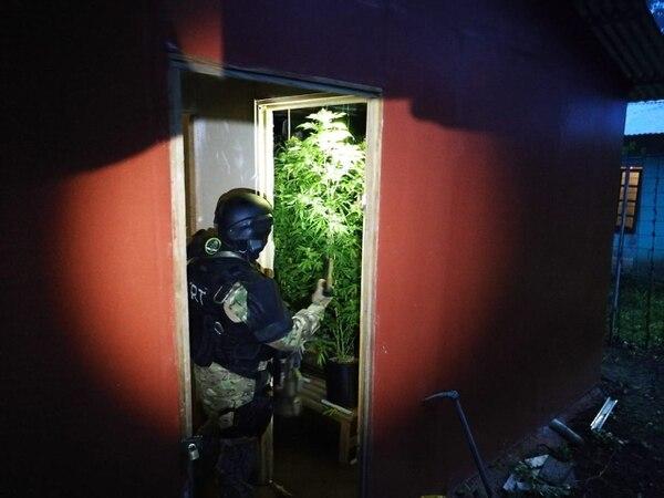 Los agentes judiciales encontraron un laboratorio de marihuana hidropónica en uno de los allanamientos. Foto: OIJ para LN