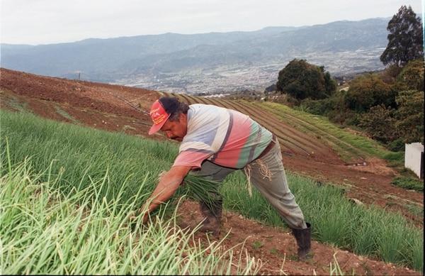 El sector agrícola muestra debilidades en varios indicadores, entre ellos, empleo formal, actividad económica y en exportaciones. Las ventas al exterior de este sector cayeron 7,7% en los primeros ocho meses del año respecto al mismo periodo del año anterior. | ARCHIVO