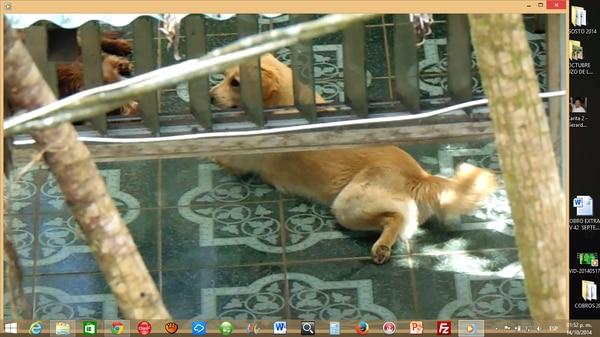 Este martes el perro estaba en un corredor de la casa en Puriscal.