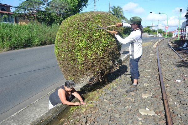 Doña Mayra y don Rónald trabajan en equipo para mantener bonito el barrio. Al lado la línea férrea. Foto: Shirley Vásquez