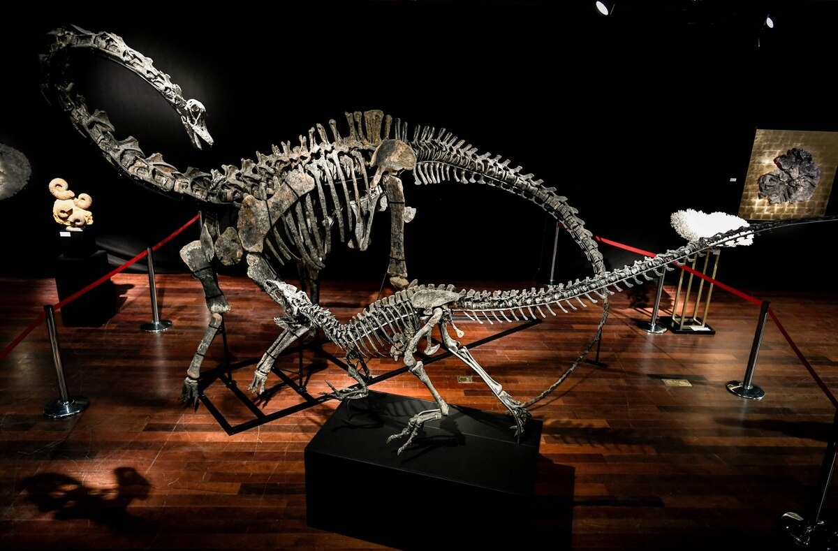 They are growing interested in buying dinosaur skeletons