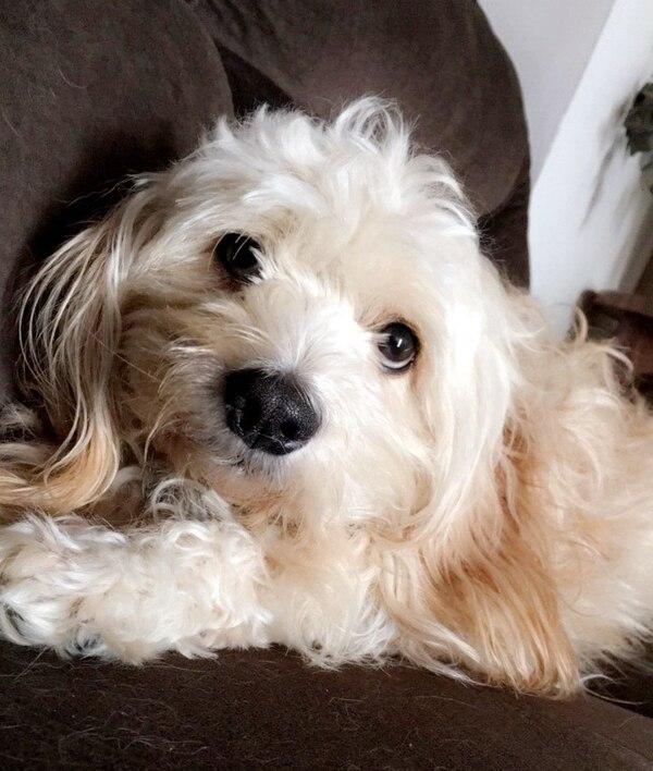 Senasa recomienda la adopción antes que la compra de un perro. Lara es una 'zaguatita' que fue adoptada hace más de un año por Melania Granados y Albin Acevedo, vecinos de Granadilla de Curridabat.