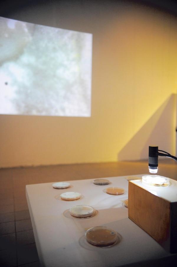 Micropaisajes II . Diana Barquero nos invita a explorar los paisajes que surgen al proyectar microorganismos vistos en el microscopio.