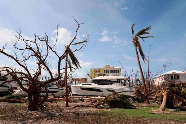 Los vientos del huracán Dorian dejaron desnudos estos árboles en Marsh Harbor, isla de Gran Ábaco, Bahamas.