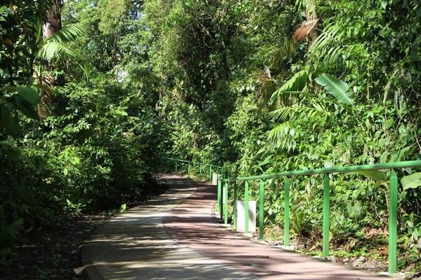 El nuevo sendero en el Parque Nacional volcán Arenal fue diseñado pensando en los observadores de aves.