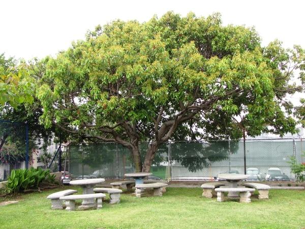 Árboles como este, de aguacatillo, serán parte del bosque de especies nativas en la Defensoría, barrio México.