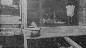 Hoy hace 50 años: Familias de Guayabo de Turrialba vivían de forma infrahumana