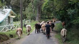 Hato nacional de ganado bovino presenta alza sostenida en últimos dos años