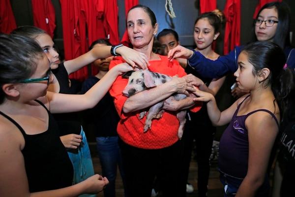 La coreógrafa María Amalia Pendones ha cuidado personalmente al cerdo Bernardo, perteneciente al elenco. Foto: Rafael Pacheco