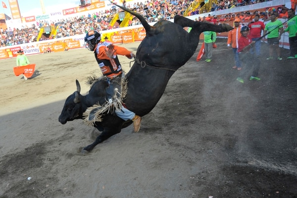 Este año la empresa concesionaria de las corridas de toros de Zapote se llama Toro Bueno. Serán 11 días de espectáculos taurinos.