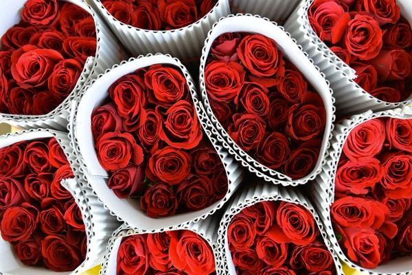 Rosas rojas, un regalo clásico para el día de San Valentín.