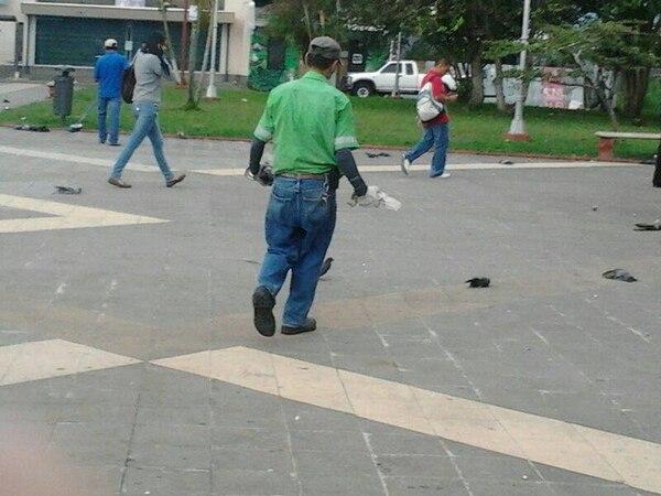 Trabajadores de la Municipalidad de Goicoechea recogieron las palomas muertas.