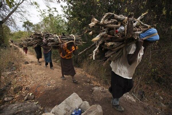 Mientras estas mujeres recogen legalmente leña en Kenia, otros talan bosques para vender la madera y generar así dinero para cometer delitos. | EFE
