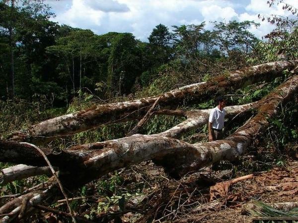 Parte del daño ambiental en Crucitas fue la corta de árboles.   ARCHIVO
