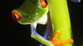 Costa Rica brinda el mayor aporte al conocimiento biológico de América Latina