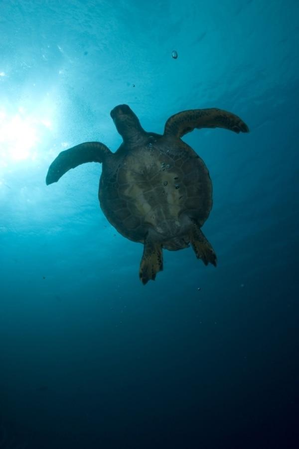 Los mares y océanos benefician al ser humano en cuanto proveen una fuente de proteína e incentivan la pesca y el turismo.   ARCHIVO