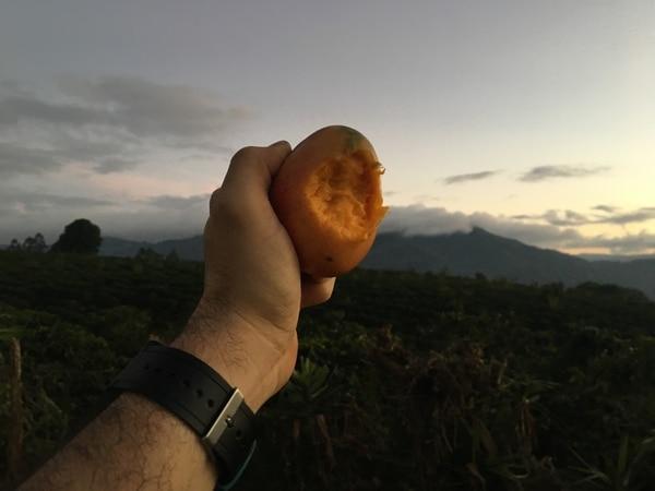 Un mango de merienda en la cuesta La Molina. Al fondo, un cafetal.