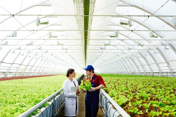 Las empresas de agroindustria suelen abrir operaciones cerca de sus insumos y así generan empleos y dinamizan la economía fuera de la GAM. Foto: Shutterstock