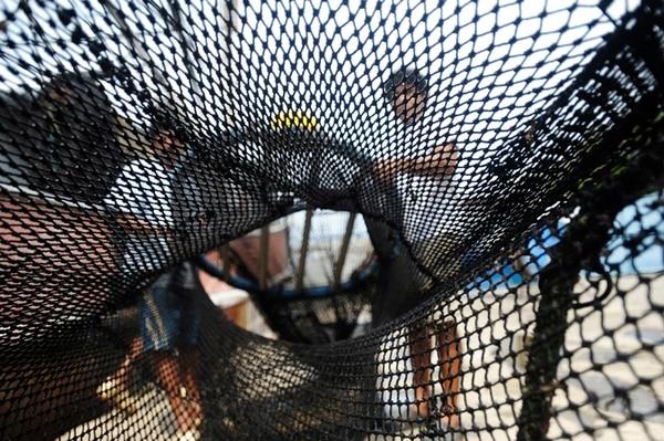 Los dispositivos de exclusión de tortugas es una manera de evitar la pesca incidental. Pablo Montiel