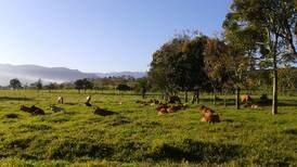 Pastoreo de ganado se convierte en aliado contra el calentamiento global