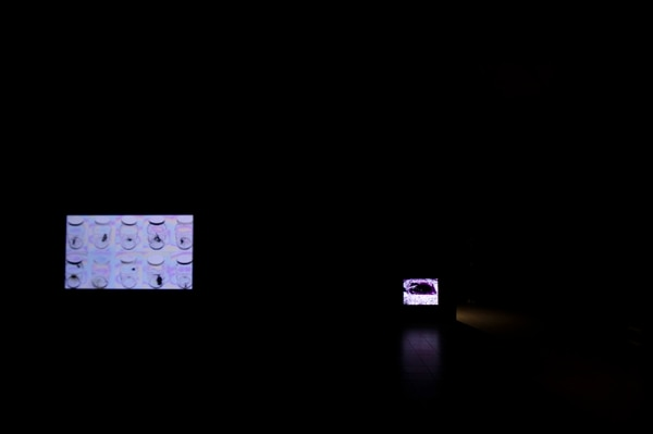 En primer plano, 'Lá cámara' de Andy Retana. Foto: Alejandro Gamboa Madrigal.