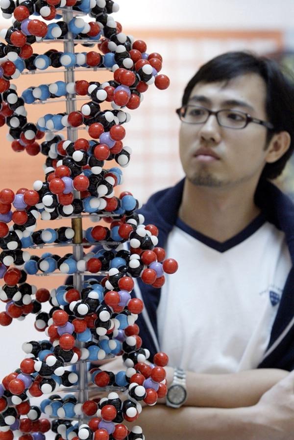 Una nueva investigación sostiene que el código genético puede escribir dos tipos de información de manera simultánea. La iniciativa es financiada por el Instituto Estadounidense de Investigación del Genoma. | ARCHIVO/EFE