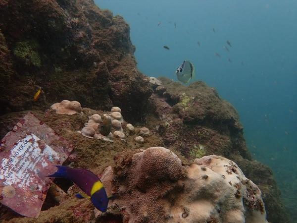 Decreto ejecutivo busca promocionar iniciativas de restauación y conservación para la recuperación de los ecosistemas coralinos, bajo reglas claras. Cortesía: Tatiana Villalobos para LN