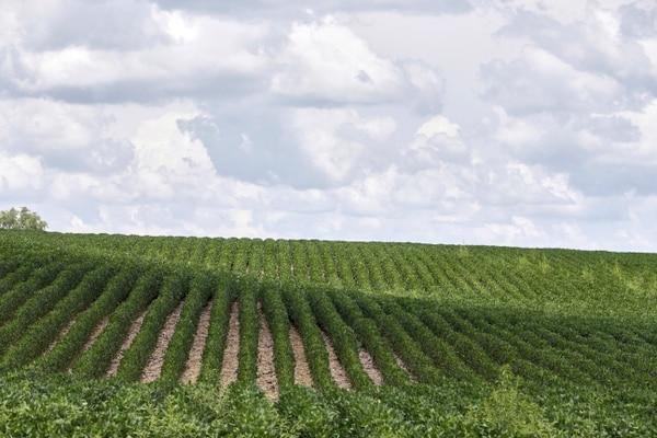 Un nuevo reporte de expertos de la ONU advierte que el cambio climático y la degradación de los suelos, están provocando que los alimentos sean más caros, más escasos e incluso menos nutritivos, y está reduciendo el número de especies en la Tierra. Foto: AP