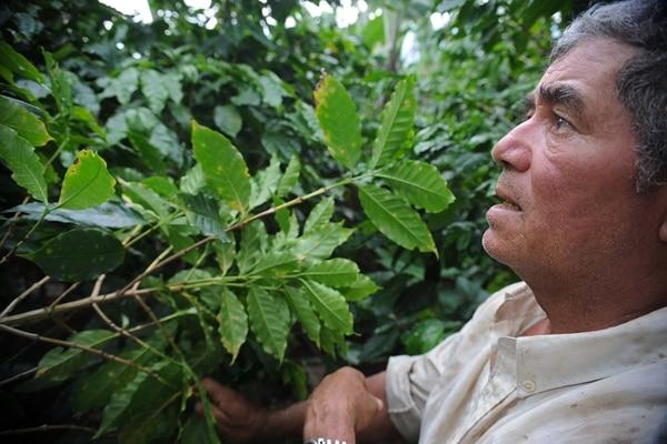 José Francisco Molina, de Turrialba, es uno de los productores fuertemente afectados por la roya que espera la ayuda del programa. | ARCHIVO/ALBERT MARÍN