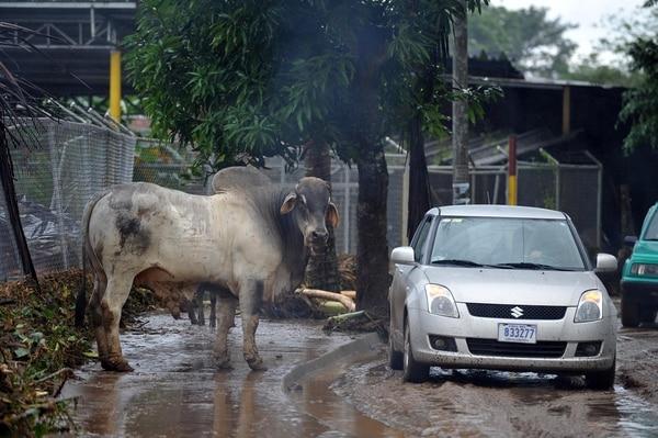 Huracán Otto deja severos daños en Upala