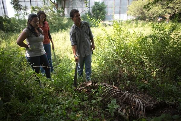 Rafael Toro, estudiante de Veterinaria, y dos compañeras observaban el esqueleto de la yegua Miss Congeniality en un campus de la Universidad Central de Venezuela en Maracay.