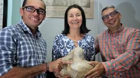 Costa Rica descubre animal prehistórico: perezoso de cuatro toneladas vivió en Coto Brus hace 5,8 millones de años