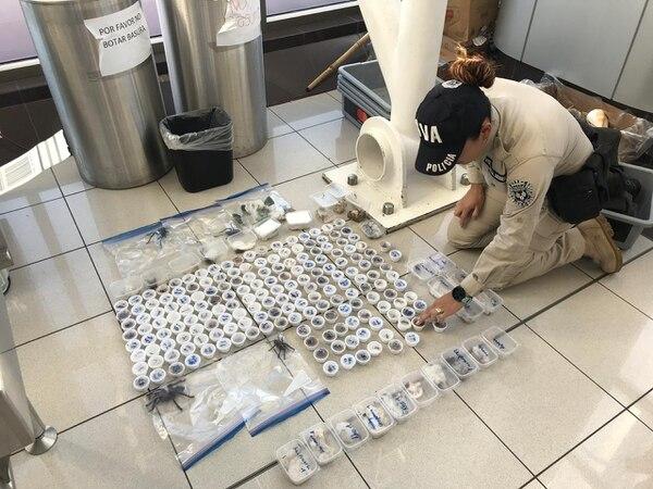 En febrero pasado, dos foráneos intentaron sacar del país decenas de insectos y arácnidos sin cumplir requisitos sanitarios. Foto: MSP