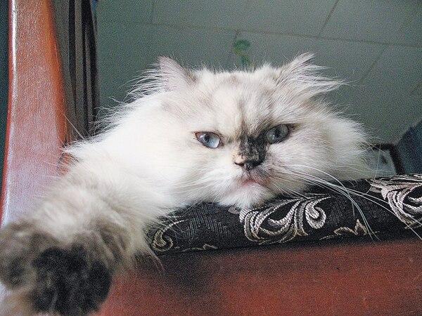 El acusado dijo sentirse frustrado porque, en general, los gatos no se acercan a él.