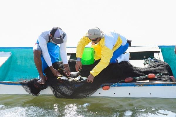 El pescador Braidy Martínez y el investigador Luis Hernández verifican las especies que capturaron en la red. En los últimos años se ha observado una disminución en la cantidad de anchovetas en el golfo de Nicoya.