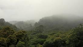 Bosque nuboso registra más lluvias en menos tiempo