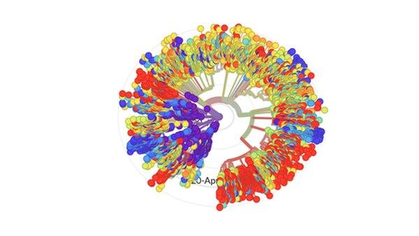 Esta es una imagen que da una idea de las diferencias secuencias genómicas del virus SARS-CoV-2, causante de la covid-19, que se han compartido en la plataforma Nextstrain.
