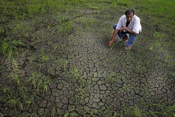 La sequía afecta Guanacaste desde el año pasado. | ARCHIVO