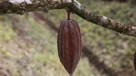 Diez beneficios del cacao para la salud