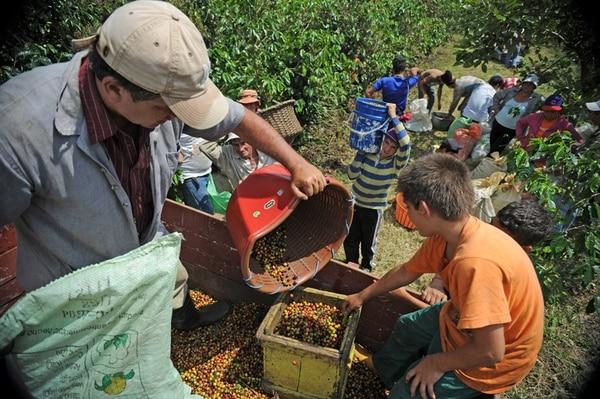 La recolección de café está en plena marcha y los productores dicen no contar con recursos, con los cuales pagar los créditos que tradicionalmente piden para financiar esa tarea. | ARCHIVO/ALBERT MARÍN