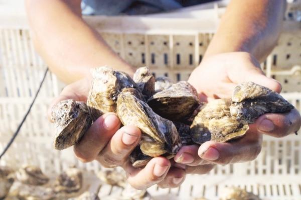Se busca que Ecuador colabore con los pescadores que desarrollan cultivos de ostras, camarones y peces en el Pacífico, ante el agotamiento de los recursos marinos.