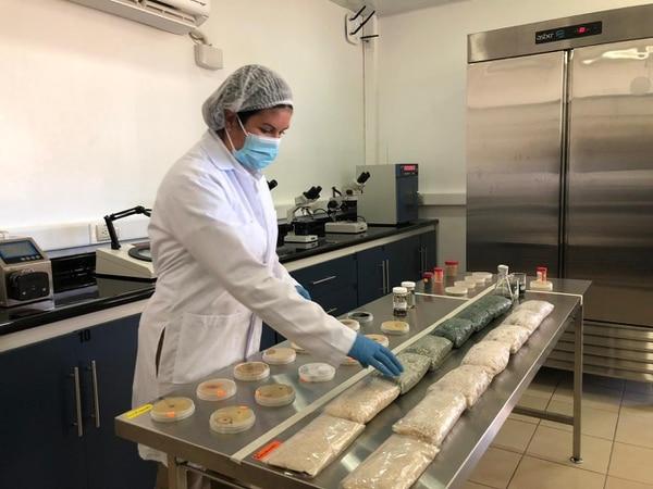 En el laboratorio de la firma agrícola se desarrollan hongos y bacterias benéficos, los cuales se diseminan en el campo para el control de plagas. La empresa prefirió no dar el monto de la inversión. Foto: Cortesía de la empresa