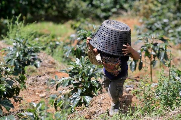 En los cafetales de la zona de Los Santos, el aporte de la mano de obra extranjera es fundamental entre noviembre y marzo de cada año. Los productores temen un faltante de peones para este año, consecuencia del impacto del nuevo coronavirus y el cierre de fronteras. Foto: Rafael Pacheco