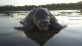 Ningún proyecto de tortugas sobrevive sin las comunidades