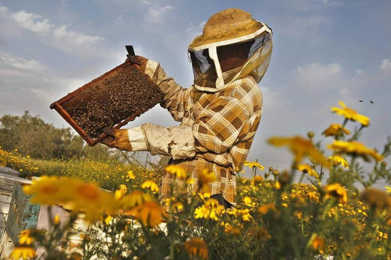 Los apicultores calculan que en el país hay actualmente entre 30 mil y 40 mil colmenas, ubicadas en cerca de 800 apiarios. Pero afirman que los residuos de agroquímicas matan cada año cerca del 7% del total de abejas. Foto: Facebook de la Cámara