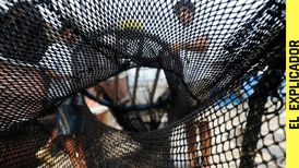 Pesca de arrastre: ¿qué es y por qué científicos afirman que es perjudicial para el medio ambiente?